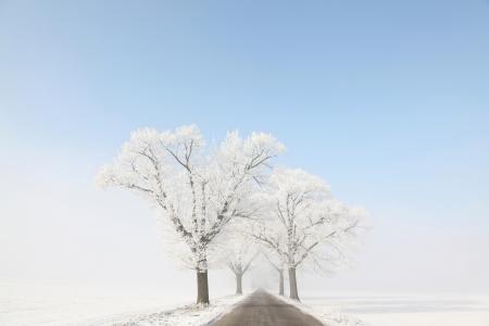 Frosty �rboles de roble de invierno a lo largo de un camino rural en el fondo de cielo azul