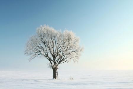 Eenzame winter boom bedekt met vorst Stockfoto