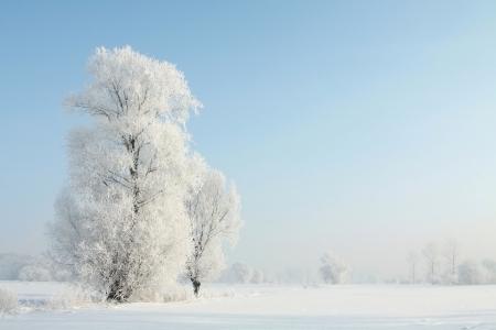 Berijpte bomen op de ochtend een zonnige december G Stockfoto