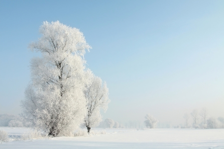 Frosted trees on a sunny December s morning photo