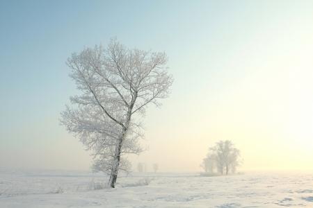 Frosted árbol en una soleada mañana de invierno