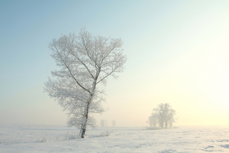 Frosted tree on a sunny winter morning Stok Fotoğraf