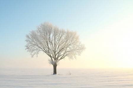 Einsamer Baum auf einem Feld an einem sonnigen wolkenlosen Morgen