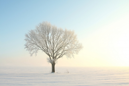 Lonely tree in a field on a sunny cloudless morning