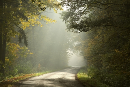 Lane running through the autumn deciduous forest at dawn photo