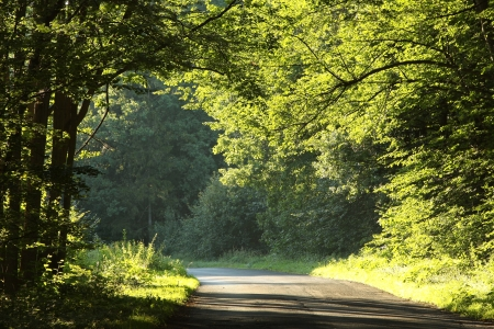Country road running through the deciduous forest on a foggy morning Stock Photo - 14824716