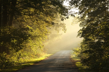 Picturesque scenery of the rural lane in the autumn woods on a foggy morning photo