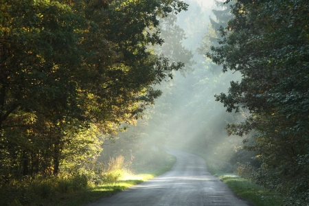 Rural lane running through the deciduous forest on a foggy morning photo