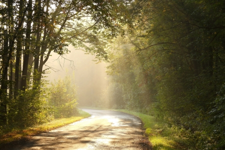Sunlight falls on the rural lane in the misty autumnal forest