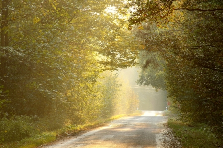Country road leading along the autumn trees lit by the setting sun photo
