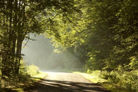 Land weg doorheen het najaar van loofbos Stockfoto