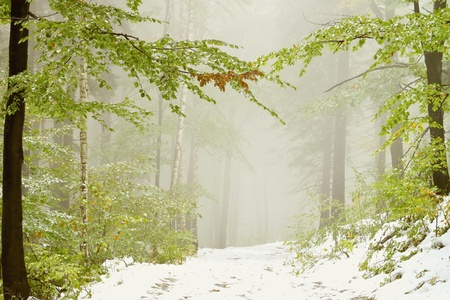 Lane in the misty forest in early autumn with snow lying on the ground photo