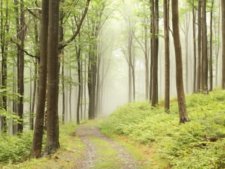 Mountain trail in the misty autumnal forest in a nature reserve