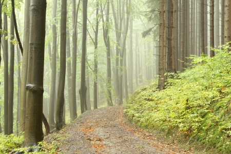 Mountain trail leading through a foggy autumn beech forest on a rainy day photo