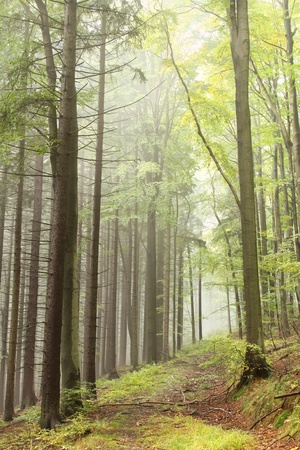 autumn path: Path leading through the autumn forest on a misty morning