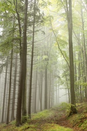 Mountain trail in the misty autumnal forest in a nature  photo