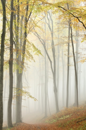 path to romance: Path leading through the autumn forest on a misty morning