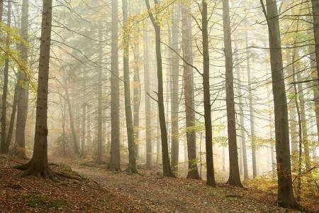 Bergpad leidt door een mistige herfst beukenbos op een regenachtige dag