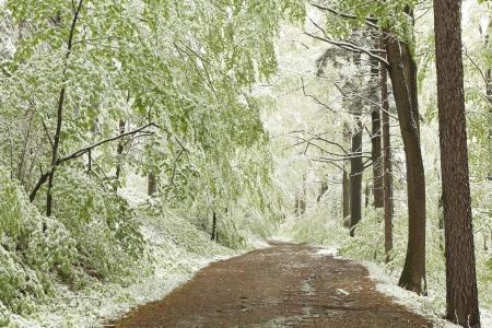 Bospad op de berghelling tijdens sneeuwval op een mistige lentemorgen