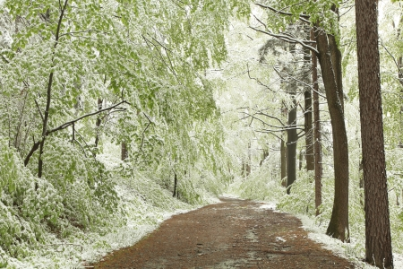 Forest trail on the mountain slope during snowfall on a foggy spring morning