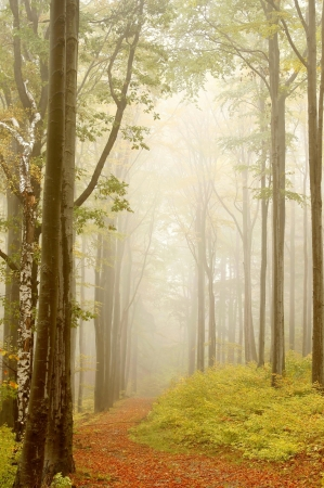 autumn path: Mountain trail leading through a foggy autumn beech forest on a Octobers morning Stock Photo