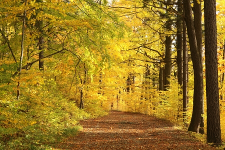 sprinftime: Path leading through a foggy autumn beech forest on a Octobers morning Stock Photo