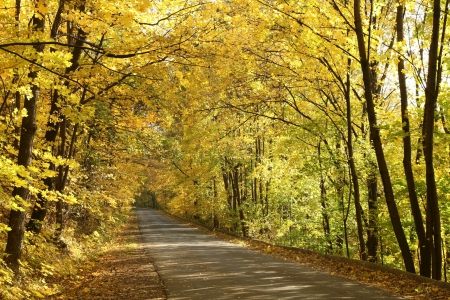 Rural road running along the maple trees in autumn morning photo