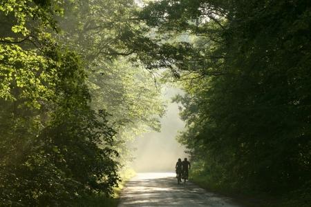 Pa�s por carretera en el bosque caducifolio primavera rodeado de hojas verdes frescas Foto de archivo