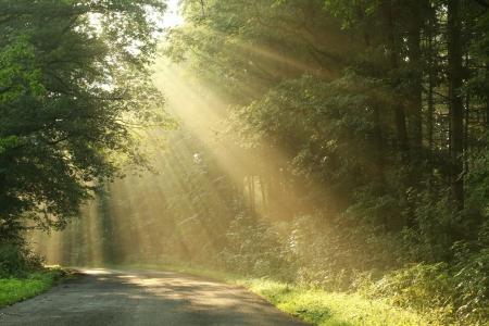 Landweg die door de lente loofbos in de vroege ochtend Stockfoto
