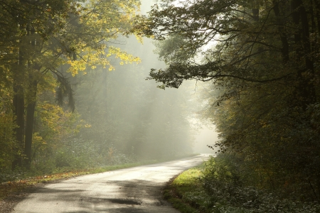 Country road running through the deciduous forest on a foggy morning photo