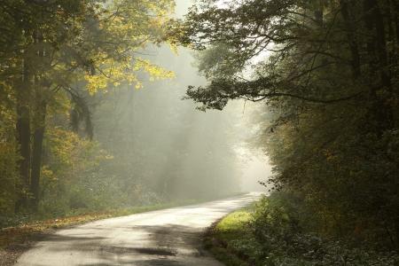 Landweg die door het loofbos op een mistige ochtend Stockfoto