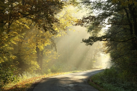 autumn path: Country road running through autumn deciduous forest