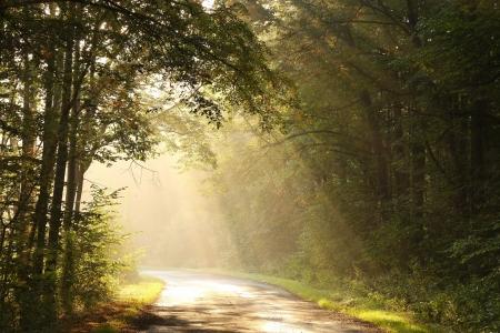 Bos weg omringd door de kleuren van de herfst bladeren Stockfoto