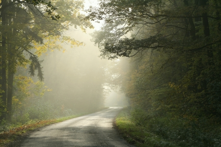 autumn path: Picturesque autumnal forest on a foggy morning with the sunlight falling on rural lane