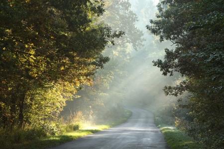 Carril rural que atraviesa el bosque de hoja caduca en una ma�ana brumosa Foto de archivo