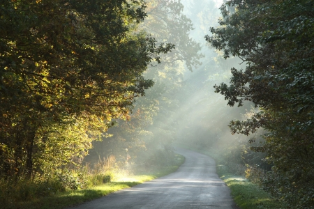 daybreak: Rural lane running through the deciduous forest on a foggy morning