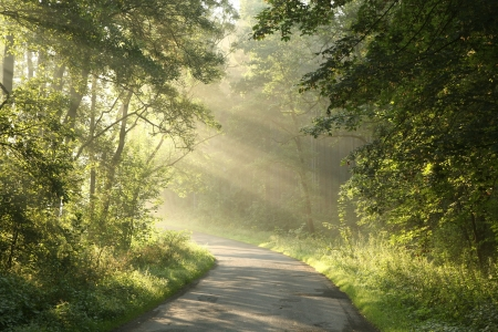 Country road in spring deciduous forest surrounded by fresh green leaves Stock Photo