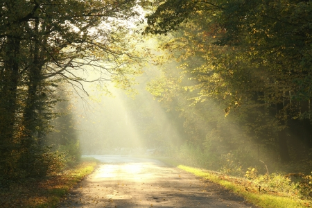 Picturesque scenery of the rural road in the autumn woods on a foggy morning