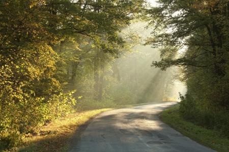 Lane leading through the misty autumn forest at dawn Standard-Bild