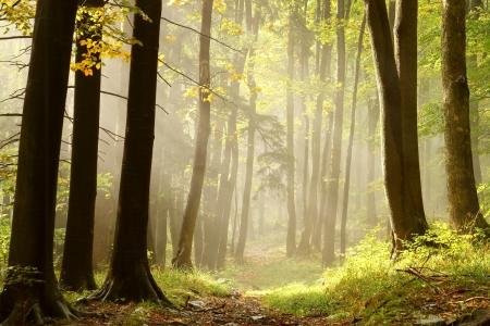 Trail leidt door een mistige herfst bos naar de top van de berg langs de naaldbomen en loofbomen Stockfoto