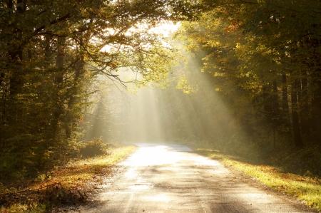 Rayos de sol que cae sobre el camino en el bosque de otoño en una mañana brumosa