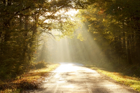 Sunbeams falling on the path in autumn forest on a foggy morning
