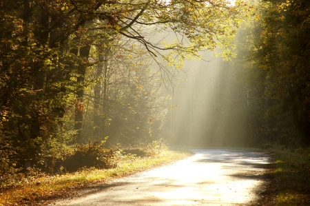 woodland scenery: Sunlight falls on the rural road in the misty autumnal forest