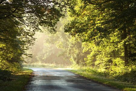 Autumn scenery of rural lane in the deciduous forest on a foggy morning Stock Photo - 15183245