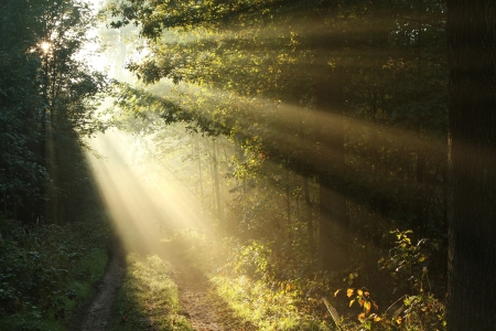 autumn path: Sunlight falling on the path in the autumn forest on a foggy morning