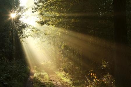 foresta: Strada sterrata nel bosco di latifoglie in una mattina nebbiosa settembre