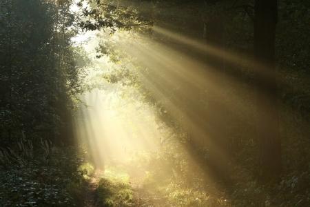 Misty bospad bij zonsopgang op de eerste dag van de herfst