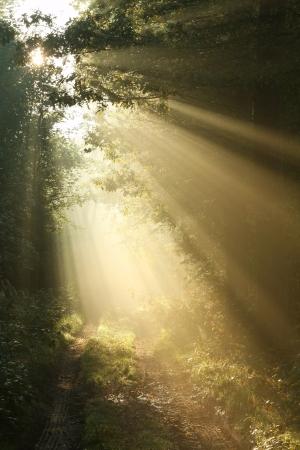 Camino de tierra en bosque caducifolio en una brumosa ma�ana de septiembre