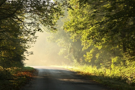 autumn path: Rural road through rich deciduous forest lit by the morning sunlight