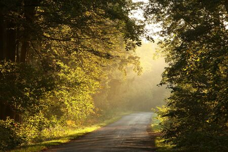 autumn path: Country road leading through the picturesque autumn forest on a misty morning Stock Photo